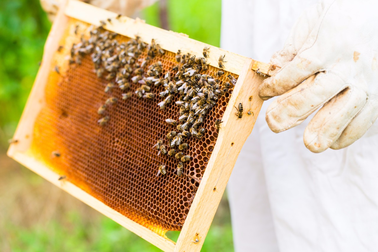 Beekeeper-holding-frame-1
